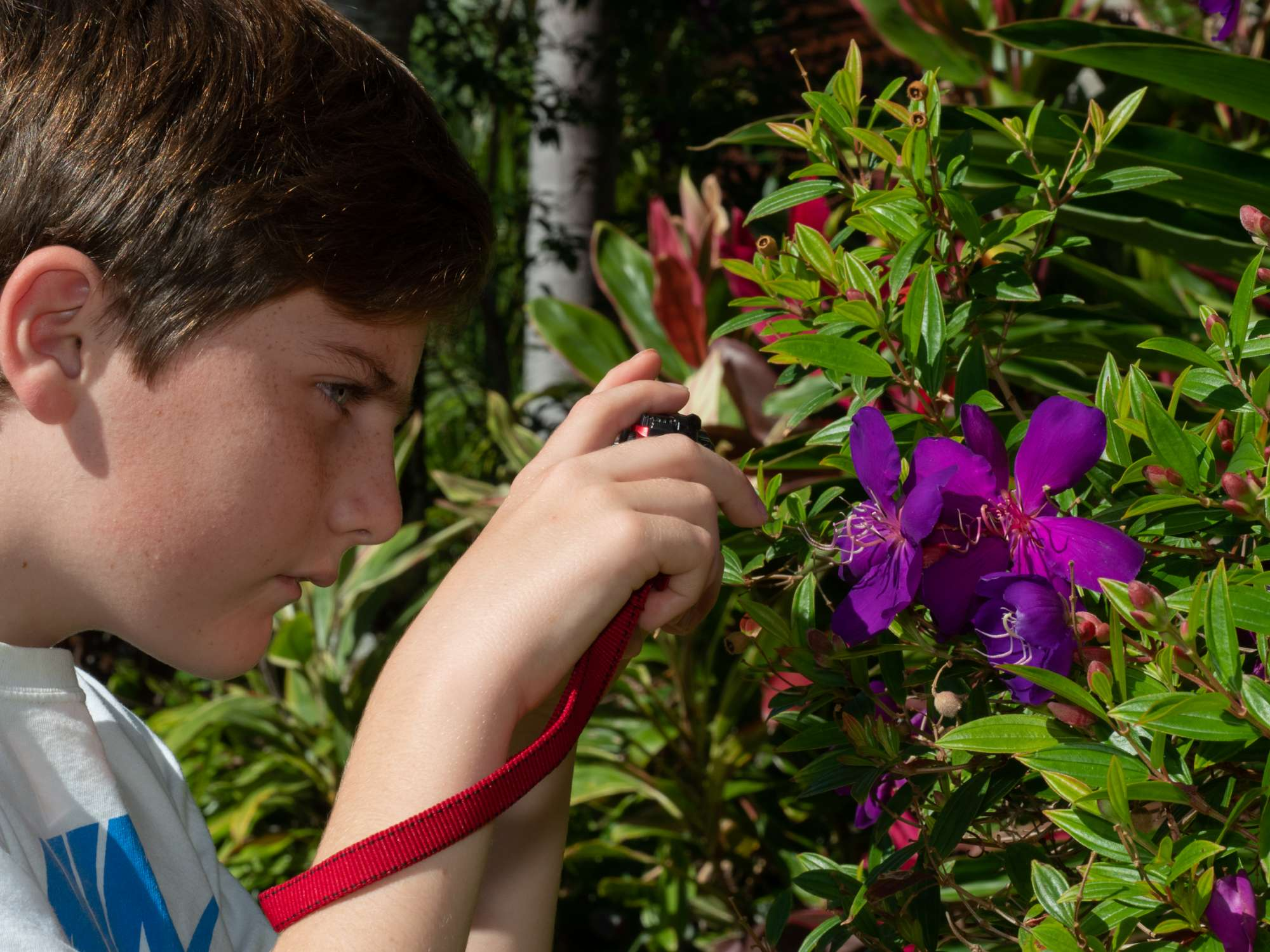 Little buggers Boy using camera to take closeup photo of some purple flowers