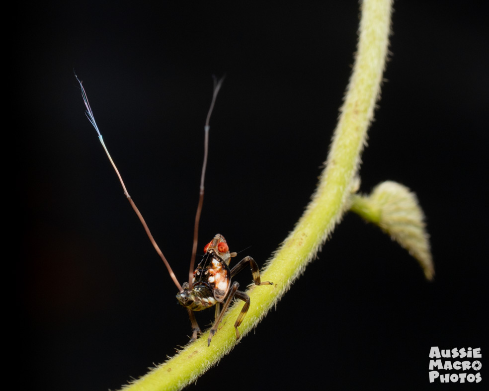 A small bug with 2 tails sitting on a leaf
