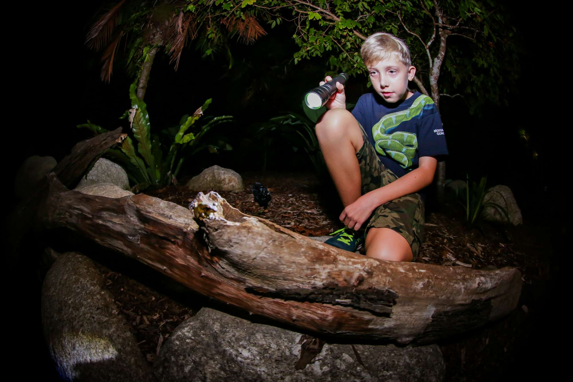 A boy with a torch shines light on a frog sitting on a log