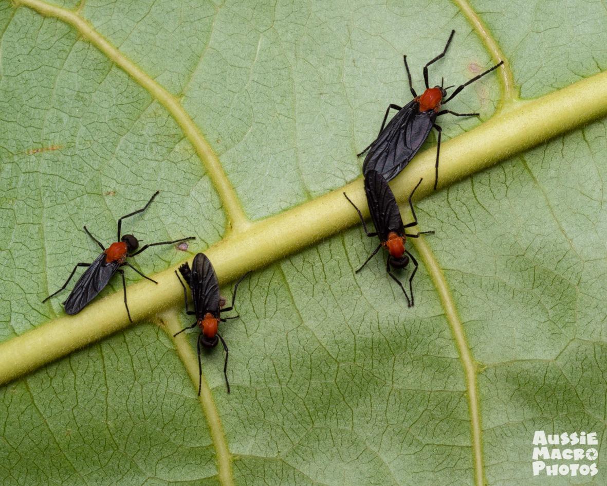 4 red and black bug flies sitting on a leaf