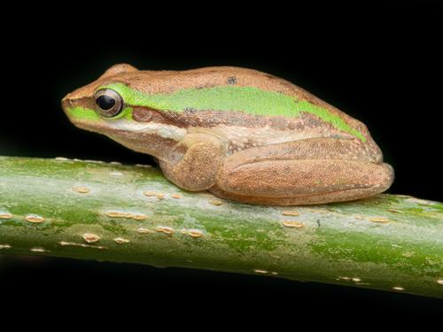 Tour Postcard sample of frog