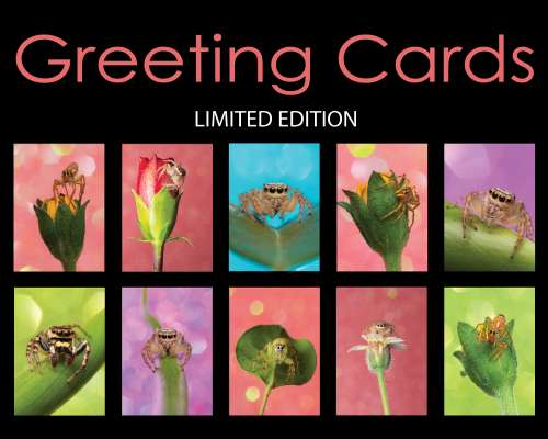 Aussie Macro Photos Jumping Spiders greeting cards Salticidae collage poster of the 10 designs of greeting cards