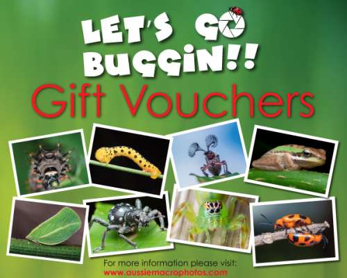 Aussie Macro Photos Gift voucher Collage for Let's Go Buggin