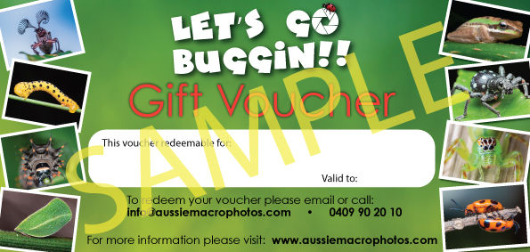 Gift Voucher Sample of a Lets Go Buggin digital voucher