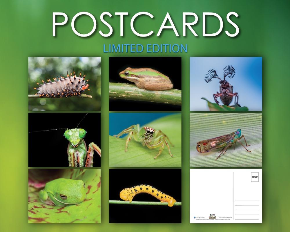 Aussie Macro Photos Tour Postcards Collage of 8 Let's Go Buggin photographs