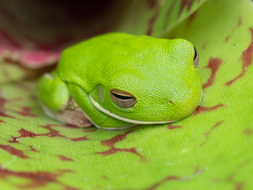 Tour Postcard sample of frog in bromiliad