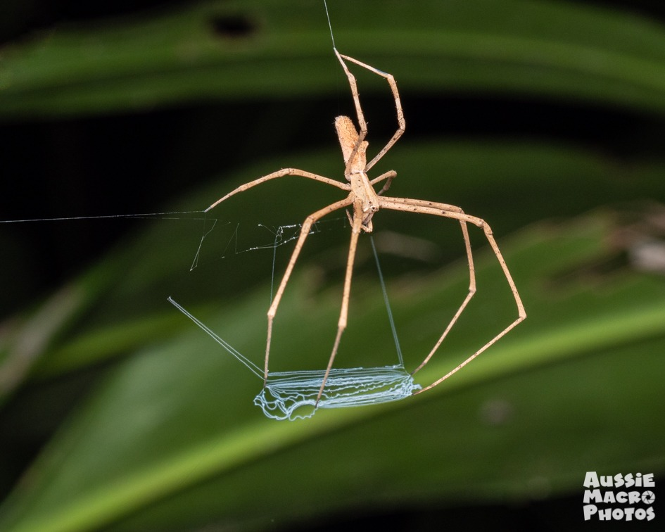 Net Casting Spider Let's Go Buggin Night Walk