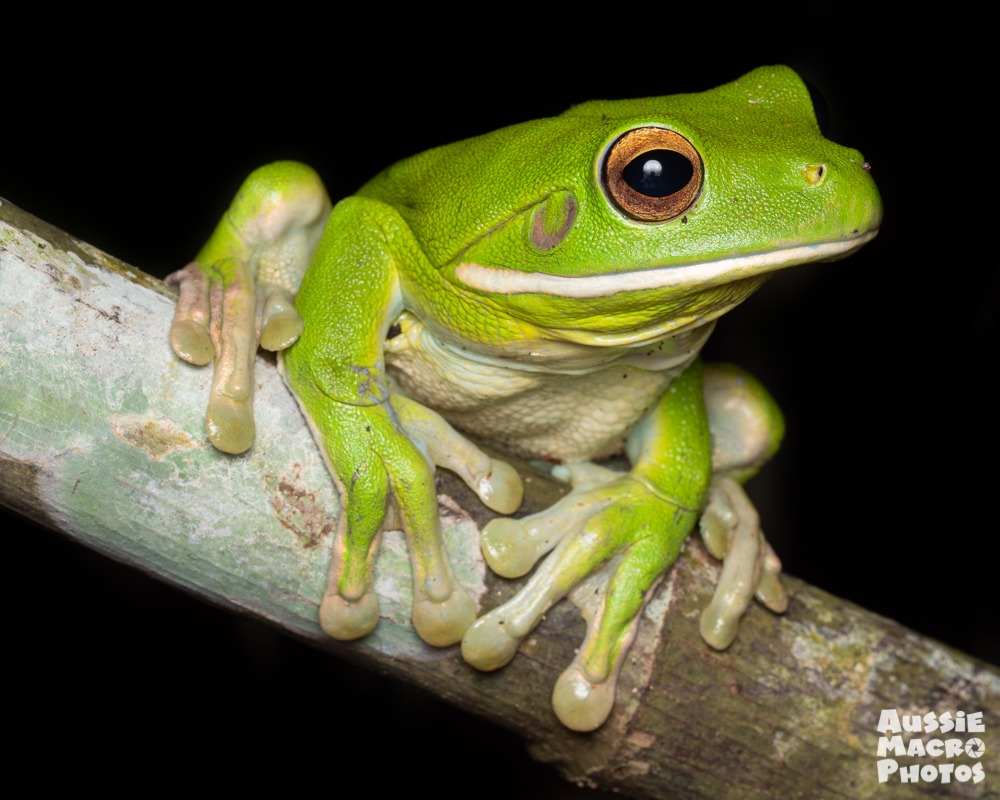 Special Nature Walks Night frog