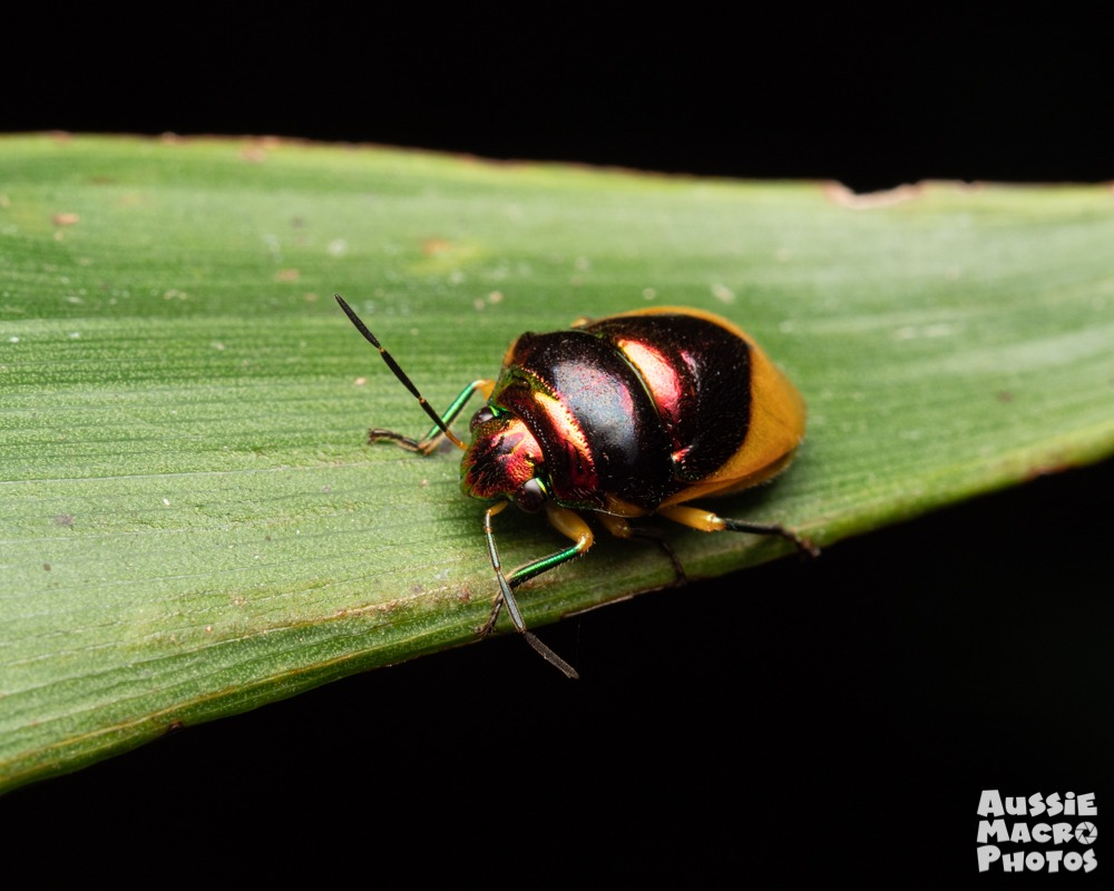 Special Nature Walks Jewel Beetle
