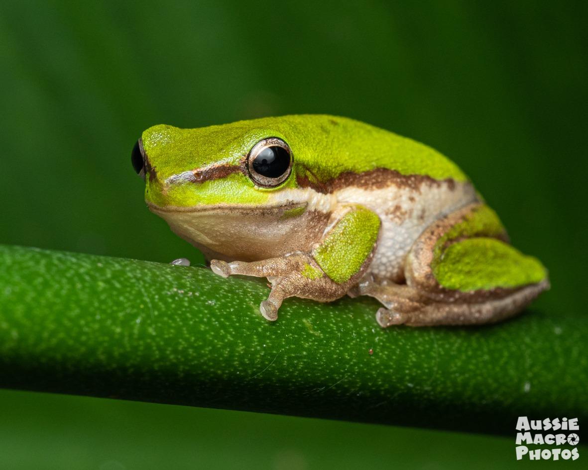 Green Frog Lets Go Buggin Night Walk