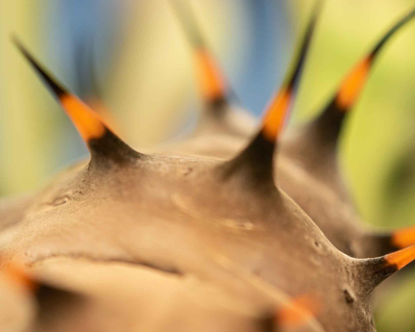 Extreme Closeup of Caterpillar spikes
