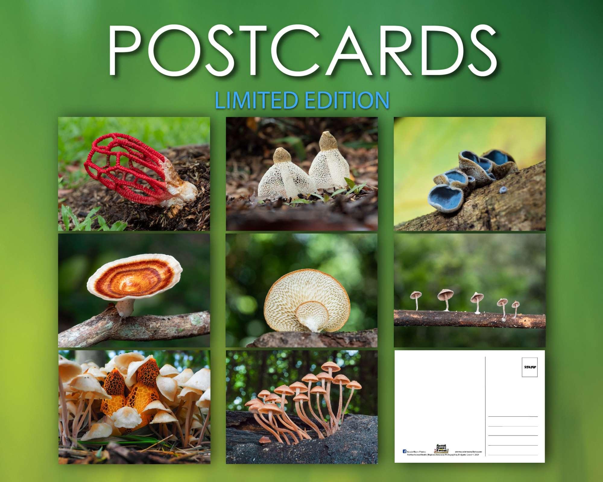 Mushroom postcards Bundles from Aussie Macro Photos