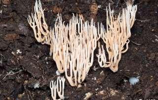 Coral Fungi mushroom photography tour