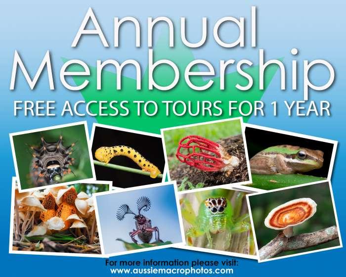 Annual membership Voucher Promo