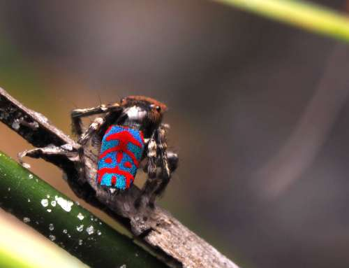Welcome to Look Closer with Aussie Macro Photos