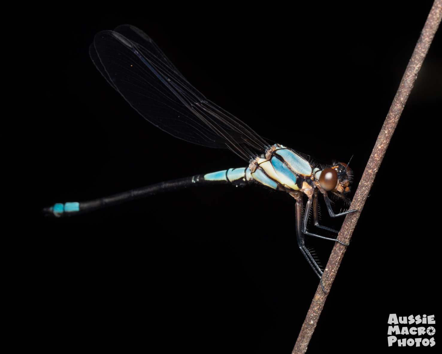 Dragonfly on Let's Go Buggin Tour