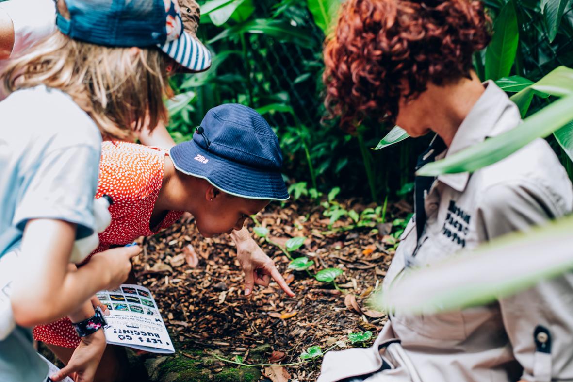 children looking at Fungi in Cairns Botanic Gardens